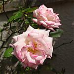 2012043007