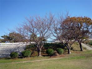 2010120502
